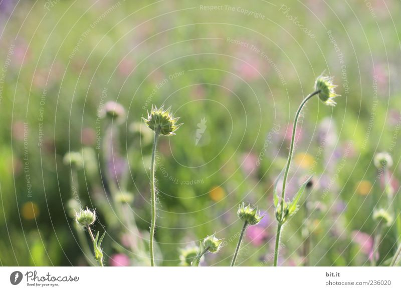 Nature Vacation & Travel Plant Green Summer Flower Meadow Grass Spring Blossom Natural Happy Feasts & Celebrations Field Wild Birthday
