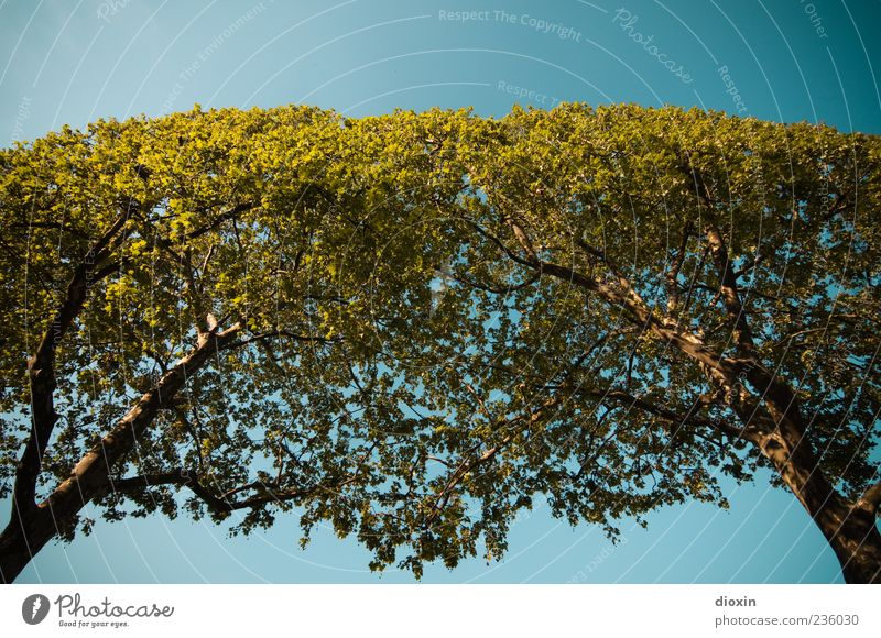 Sky Nature Tree Plant Environment Air Bright Climate Natural Tall Growth Branch Beautiful weather Tree trunk Treetop Cloudless sky