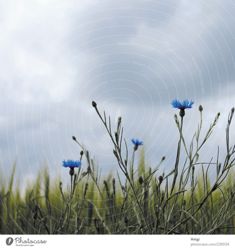 Sky Nature Blue Green Beautiful Plant Flower Clouds Environment Landscape Gray Spring Field Natural Esthetic Growth
