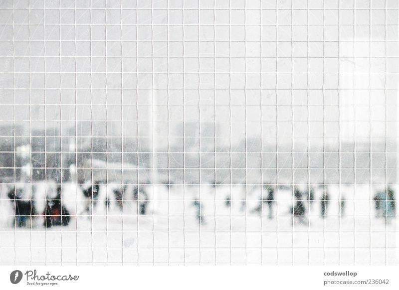 Safety first Winter Snow Cold Gray White Alster Safety glass Grid Panorama (View) Weather Ice Pedestrian To go for a walk Reflection Landscape Subdued colour
