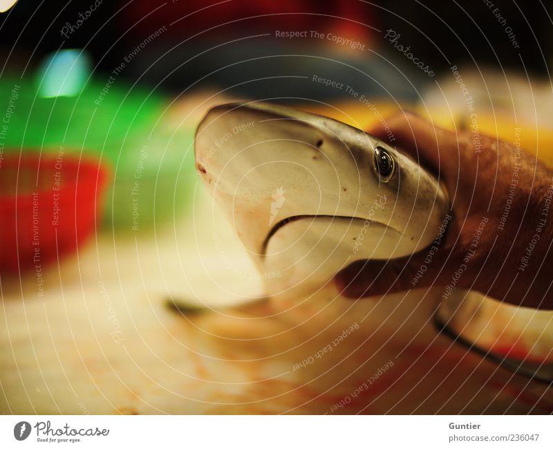 Hand White Green Red Ocean Animal Black Death Eyes Food Brown Wild animal Nose Fish Hunting Trade
