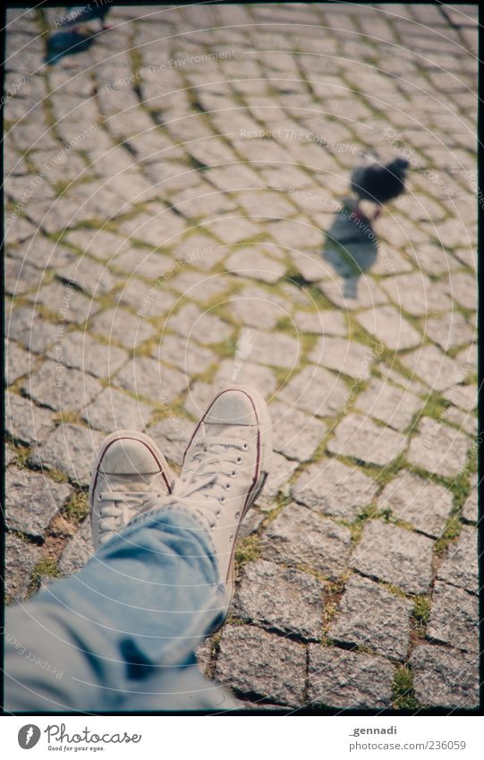 small-town jungle Legs Feet Paving stone Cobblestones Jeans Footwear Chucks Animal Pigeon Sit Uniqueness Vignetting Frame Observe Bird Colour photo