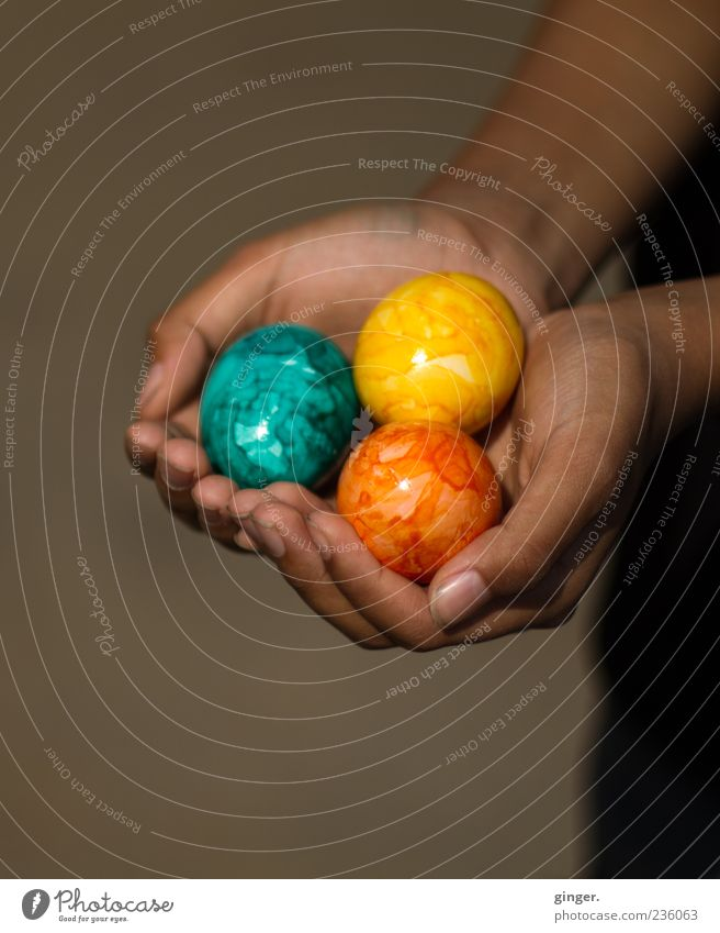 Here you go. Food Human being Infancy Hand Fingers 1 To hold on Public Holiday Easter Tradition Egg Offer Donate Gift Tricolour Swarthy Presentation Decoration