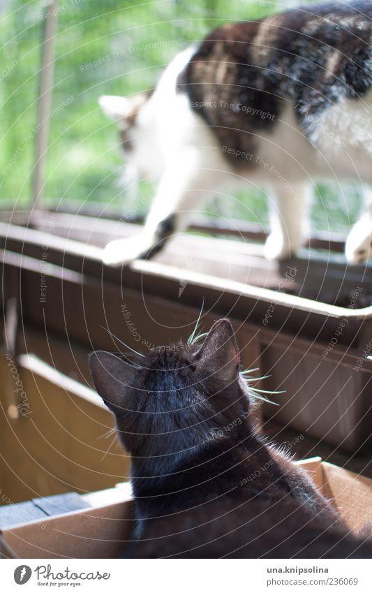 Animal Movement Lie Going Observe Pelt Balcony Pet Balance Paw Window box