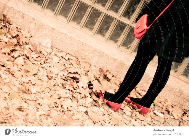 Human being Woman Red Leaf Black Adults Feminine Autumn Legs Footwear Stand Retro Tilt Tights Coat Partially visible
