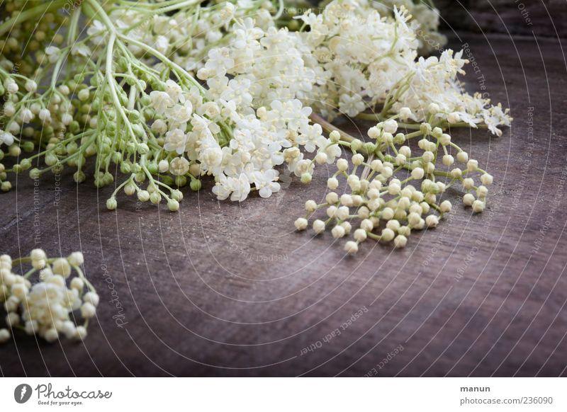 White Plant Blossom Spring Healthy Fresh Authentic Lie Natural Fragrance Elderflower