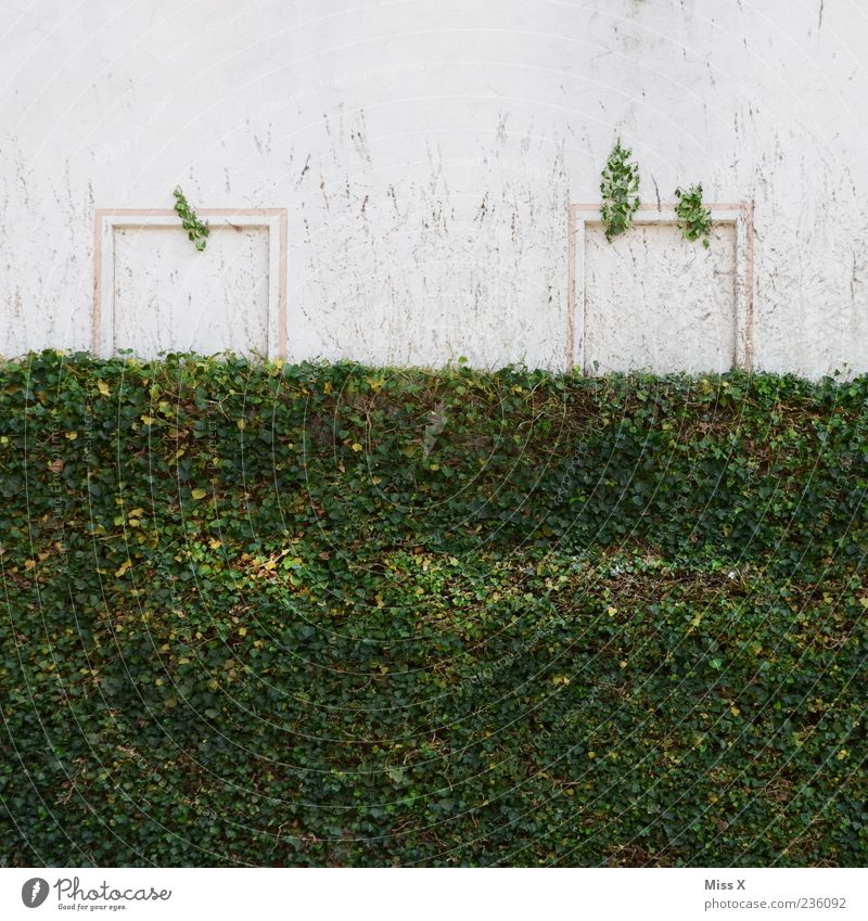A face! Plant Bushes Ivy Wall (barrier) Wall (building) Green Smiley Colour photo Exterior shot Deserted Copy Space top Window frame White Exceptional Sunlight