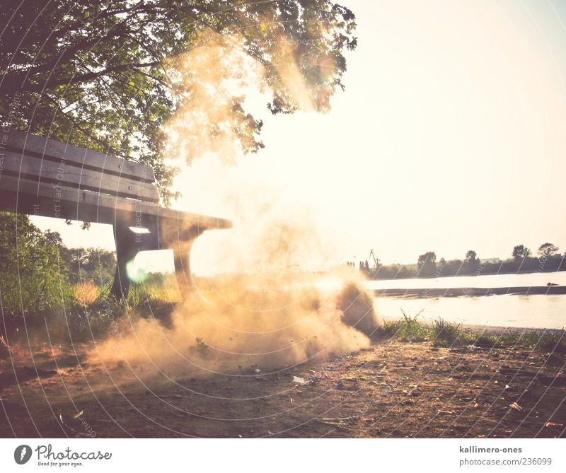 The Summer Dust Sand Sun Sunlight Beautiful weather Tree Grass River bank Bench Bright Dry Brown Green Colour photo Exterior shot Day Twilight Light Shadow