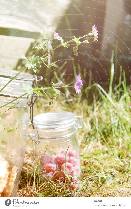 Nature Red Plant Summer Flower Meadow Grass Exceptional Candy Preserving jar