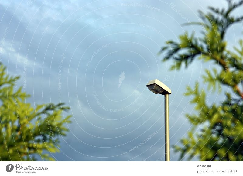 Sky Green Plant Clouds Lantern Street lighting Lamp post Cypress