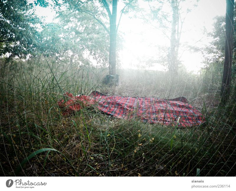 place in love Vacation & Travel Trip Camping Environment Nature Landscape Summer Fog Meadow Forest Cold Dream Loneliness Calm Picnic Blanket Colour photo