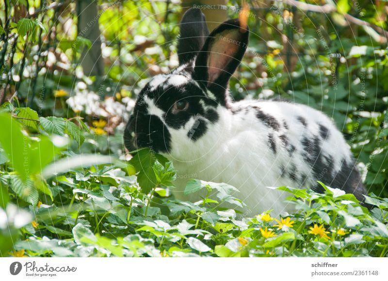 Nature Green White Flower Animal Black Spring Meadow Garden Easter Pet Hare & Rabbit & Bunny Easter egg nest Petting zoo