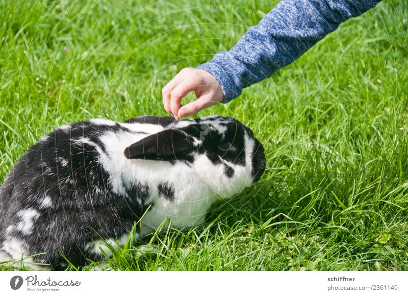 Green White Hand Animal Black Fear Arm Easter Pet Hare & Rabbit & Bunny Zoo Duck down Easter Bunny Caress Scaredy-cat Petting zoo