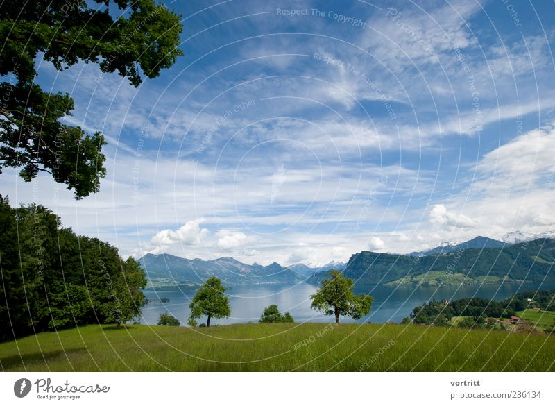 Overview of the Nature Landscape Sky Clouds Beautiful weather Tree Alps Mountain Peak Snowcapped peak Lakeside Natural Blue Green Water Meadow Colour photo