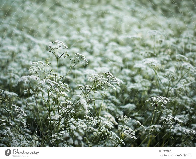 Nature White Green Plant Environment Meadow Blossom