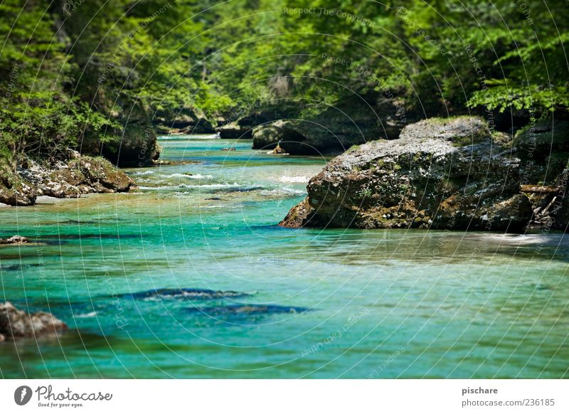 Somewhere in nowhere Nature Landscape Water Forest River bank Natural Blue Green Salzach Colour photo Exterior shot Day Shallow depth of field Rock Stone Plant