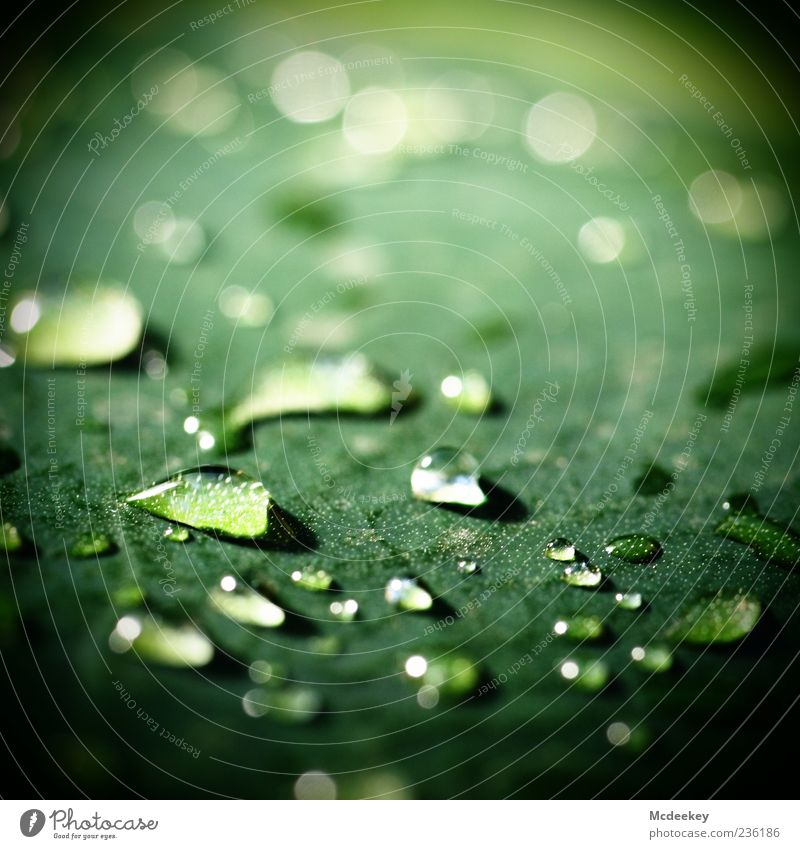 Nature Water Green Plant Summer Leaf Black Yellow Cold Glittering Natural Wet Fresh Drops of water Authentic Beautiful weather