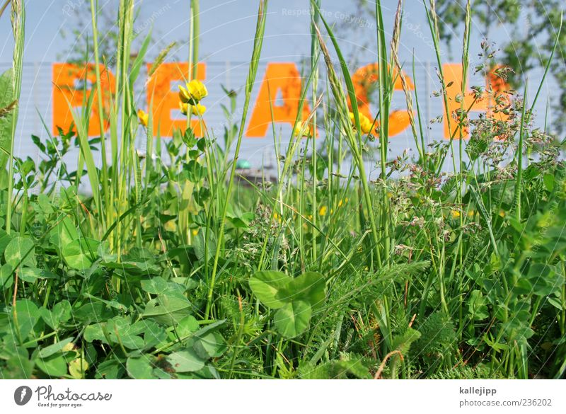 beach Lifestyle Style Leisure and hobbies Bar Cocktail bar Beach bar Lounge Going out Clubbing Characters Green Grass Blade of grass Weed Colour photo