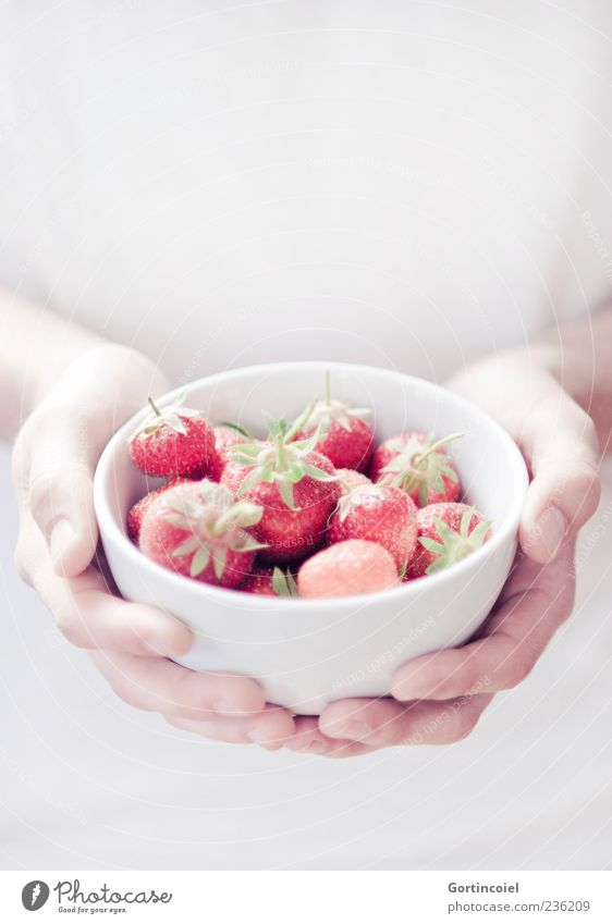 fraises Food Fruit Nutrition Organic produce Slow food Bowl Summer Red White Strawberry To hold on Hand Delicious Sweet Colour photo Subdued colour
