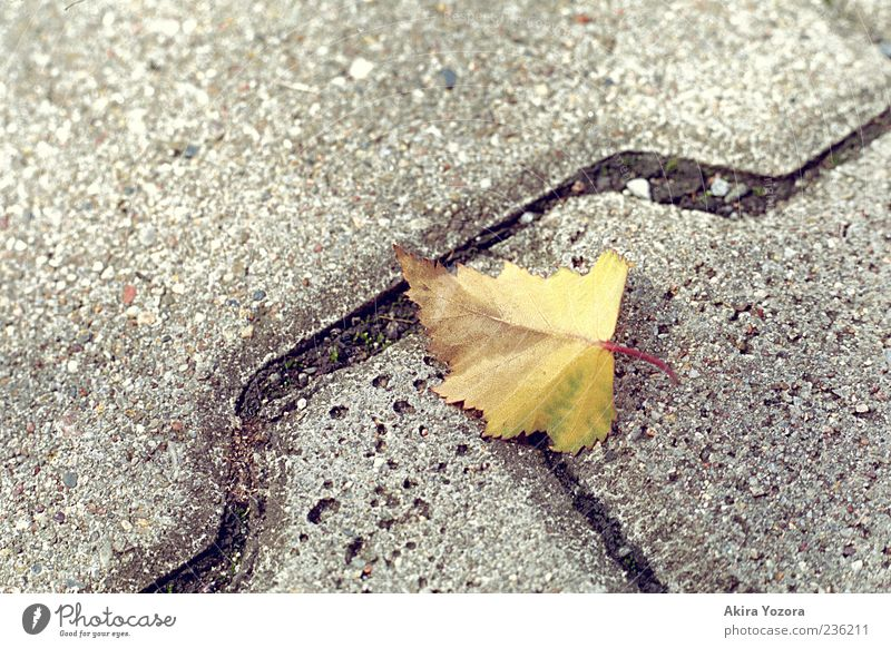 cross borders Nature Autumn Leaf Stone Lie Old Near Brown Yellow Gray Loneliness Beginning Apocalyptic sentiment Transience Paving stone Cobbled pathway