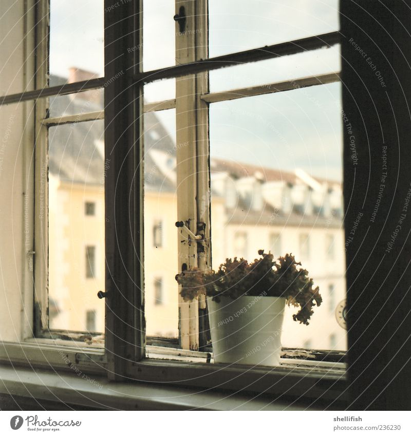 Nature Old Beautiful House (Residential Structure) Window Wood Happy Building Gold Decoration Gloomy Retro Shabby Downtown Nostalgia Lettuce