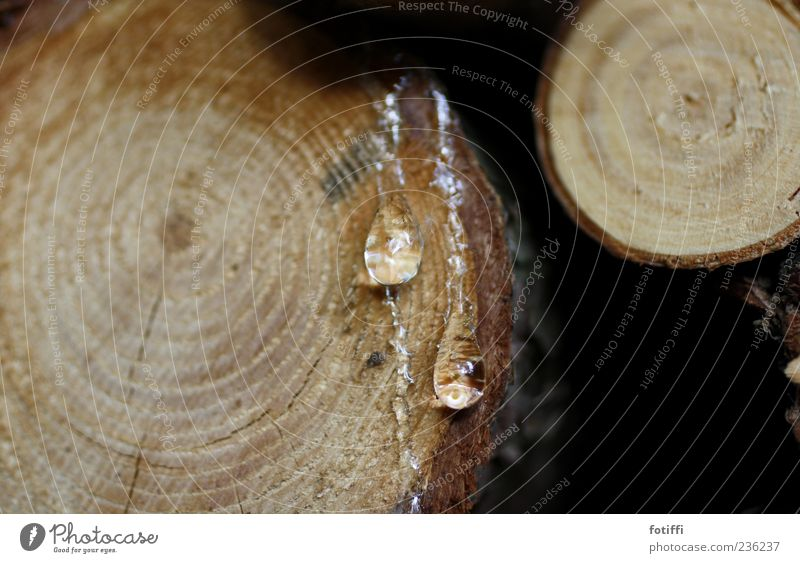 May I resin my heart for you? Nature Round Resin Tree trunk Drop Stick Circle Fluid Organic Hydrophobic Subdued colour Exterior shot Deserted Copy Space left