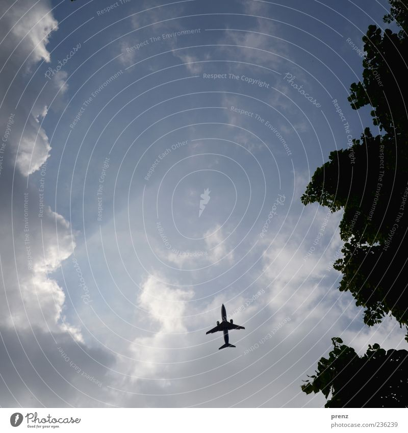 canopy Plant Air Sky Clouds Weather Transport Aviation Airplane Passenger plane Flying Blue Sunbeam Gap in the clouds Tree Leaf Back-light Silhouette