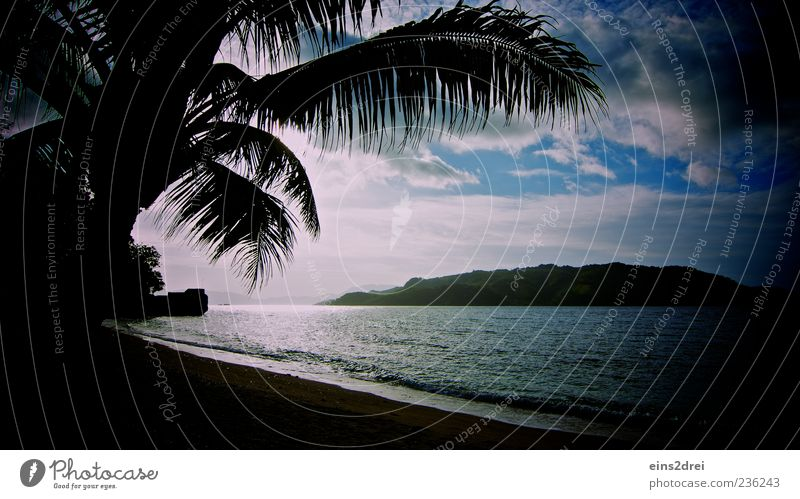 Dark Paradise Exotic Relaxation Calm Meditation Vacation & Travel Tourism Far-off places Freedom Summer vacation Beach Ocean Waves Environment Nature Landscape