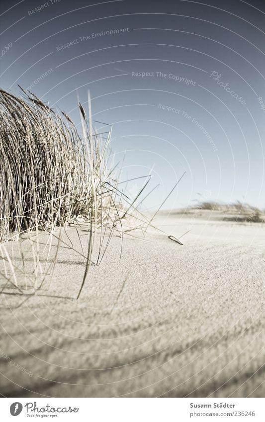 Spiekeroog longing. Nature Plant Elements Earth Sand Cloudless sky Summer Wind Grass Coast North Sea To enjoy Calm Bend Dune Marram grass Beach dune Deserted