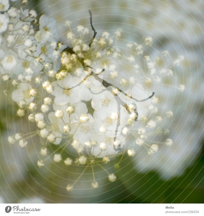 Nature White Green Beautiful Plant Spring Blossom Natural Branch Blossoming Double exposure Surrealism Superimposed