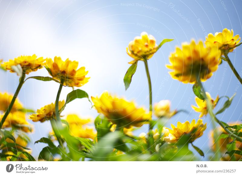 Sky Nature Blue Green Plant Summer Flower Colour Yellow Spring Fresh Esthetic Beautiful weather Blossoming Fragrance Positive