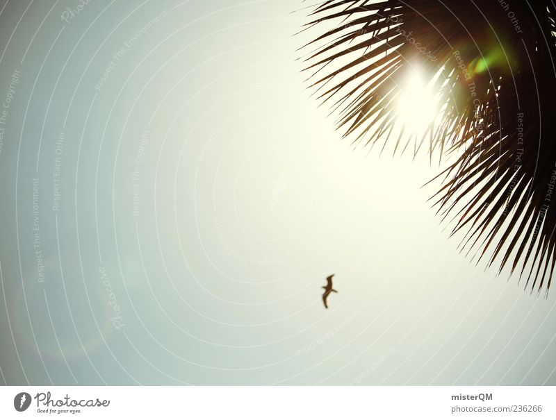 summer feeling. Esthetic Summer Palm tree Palm roof Sky Bird Freedom Sun Illuminate Colour photo Subdued colour Exterior shot Experimental Abstract Deserted