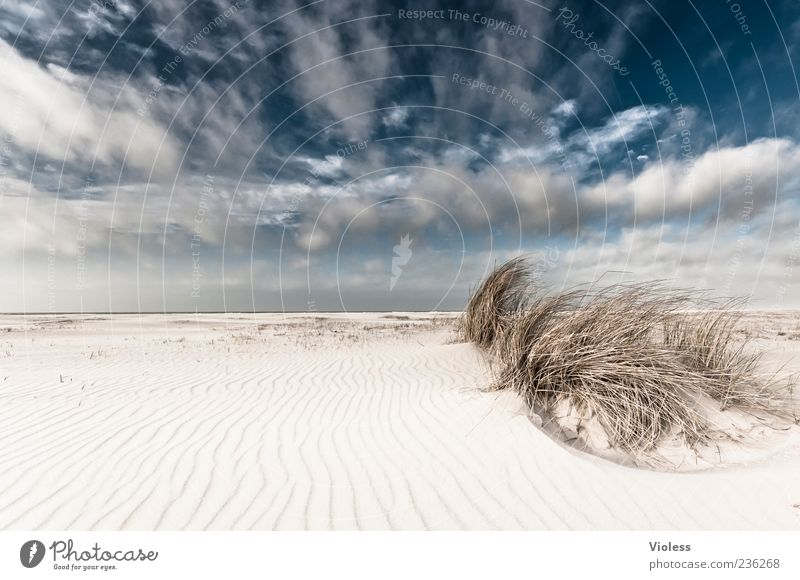 Nature Blue White Vacation & Travel Ocean Summer Beach Clouds Relaxation Freedom Beach dune Summer vacation Spiekeroog Clouds in the sky Marram grass Cloud cover