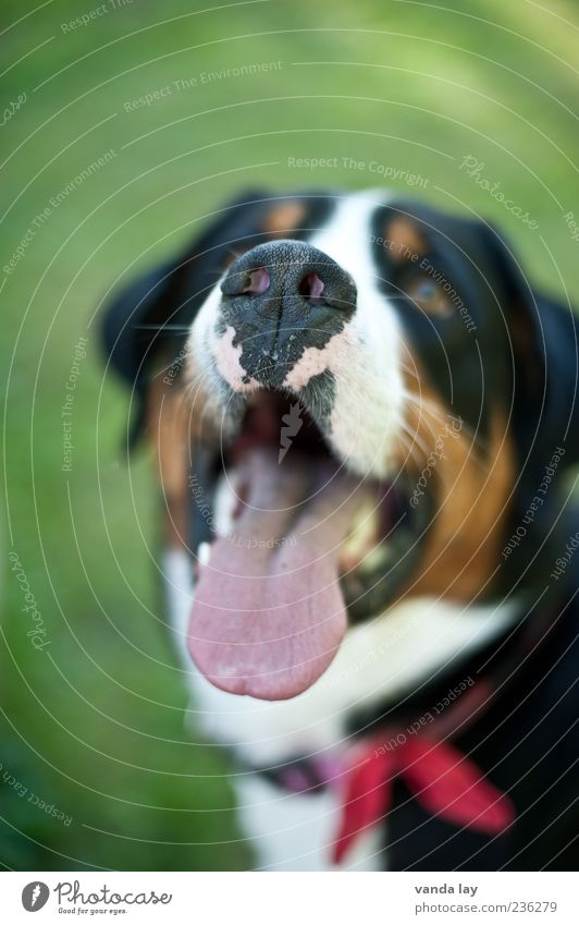 treat Nose Tongue Pet Dog more appetizing 1 Animal Neckband Colour photo Copy Space top Neutral Background Blur Shallow depth of field Animal portrait Looking