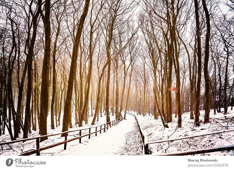 Winter forest landscape with snow covered path. Vacation & Travel Tourism Adventure Freedom Snow Winter vacation Nature Landscape Tree Park Forest