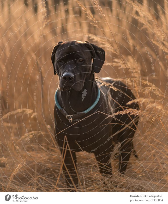 Dog in the grass Environment Nature Plant Sun Sunlight Spring Summer Autumn Beautiful weather Warmth Drought Grass Meadow Animal Pet 1 Relaxation Looking Stand