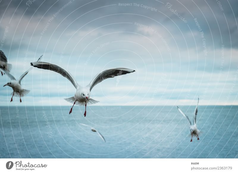 Timeless into the blue. Freedom Ocean Environment Nature Animal Elements Water Sky Horizon Climate Weather Baltic Sea Wild animal Bird Wing Group of animals