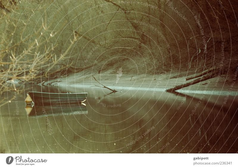 Nature Water Tree Plant Calm Landscape Coast Lake River Lakeside River bank Pond