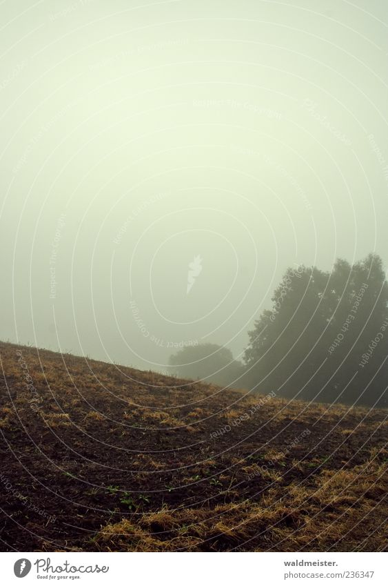 Sky Nature Far-off places Landscape Autumn Emotions Gray Brown Weather Field Fog Agriculture Dreary Apocalyptic sentiment Moody Arable land