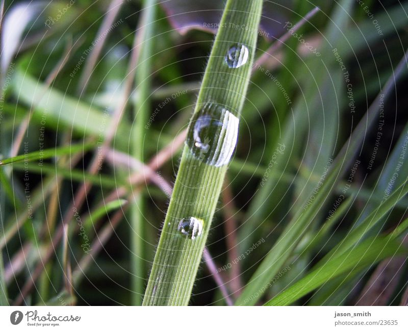 water drops Rain Grass Green Water Macro (Extreme close-up) in the field Battery all hmpffff