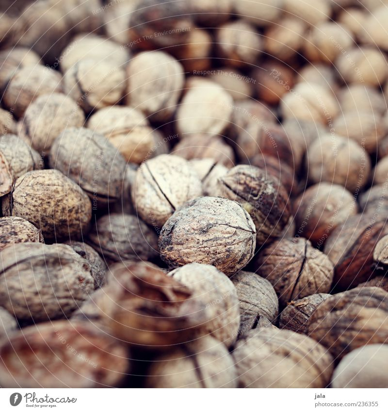nuts Food Nut Walnut Nutrition Finger food Delicious Colour photo Exterior shot Deserted Day Nature Natural Natural color Subdued colour Nut brown Nutshell