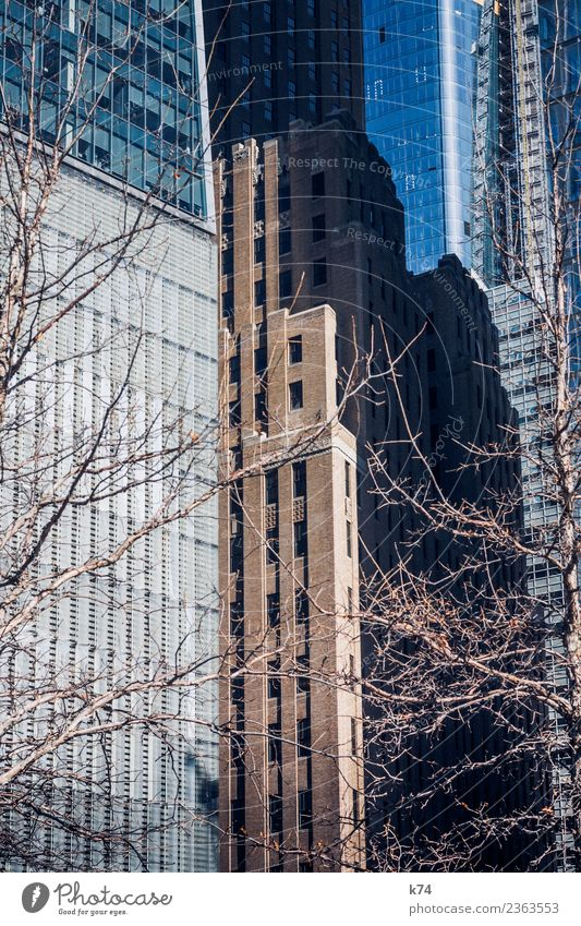 Town Tree Window Stone Facade High-rise Glass USA Large Tall Concrete Capital city Americas Downtown Steel Manhattan
