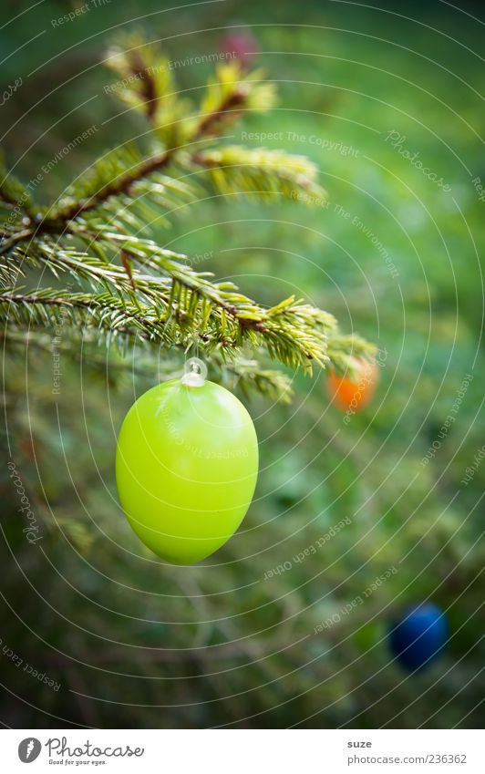 Green hang Decoration Feasts & Celebrations Easter Plastic Hang Egg Easter egg Twig Fir needle Spring April Festive Colour photo Multicoloured Exterior shot