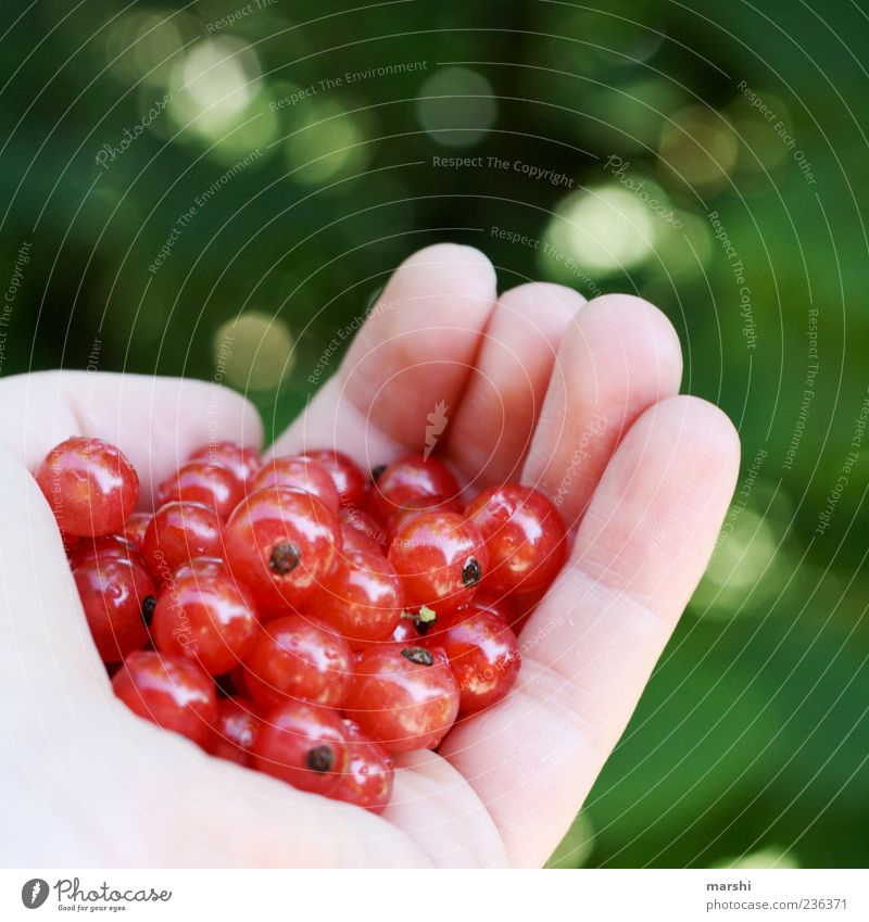 a handful of berries Food Fruit Nutrition Eating Organic produce Green Red Hand Blur buried Berries Cowberry Round Tasty Sense of taste Colour photo