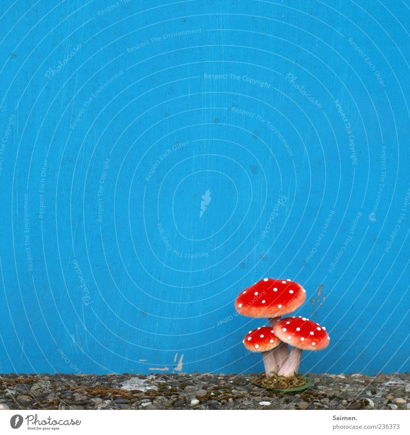 Blue Red Calm Wall (building) Wall (barrier) Facade Growth Exceptional Plastic Mushroom Whimsical Bizarre Placed Copy Space Artificial
