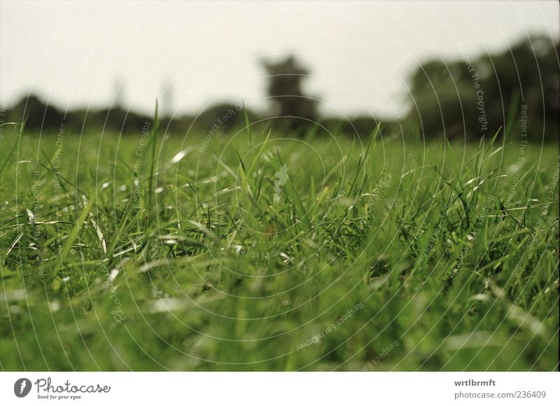 In grass 1 Trip Summer Nature Grass Meadow Relaxation Lie Dream Natural Green Contentment Leisure and hobbies Joie de vivre (Vitality) Environment Colour photo