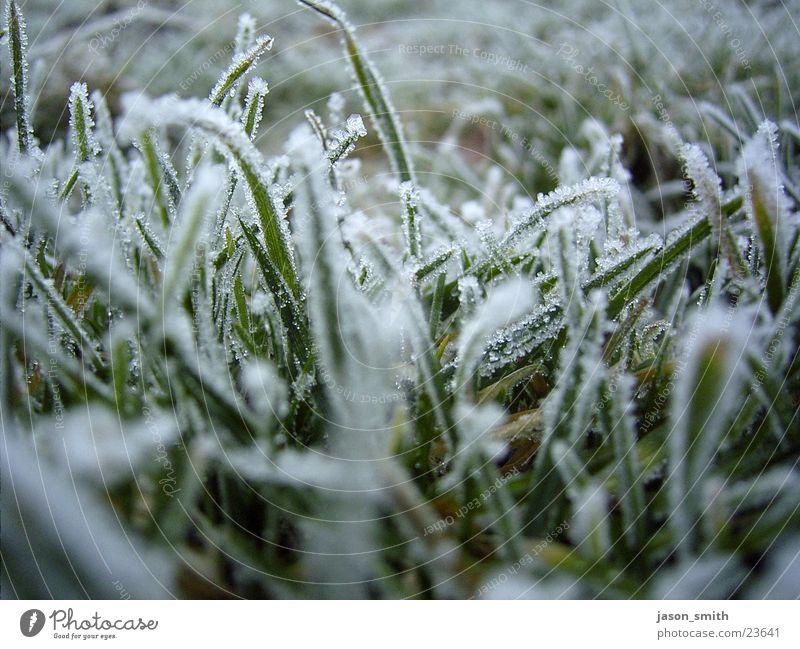 frozen green Frozen Winter Cold Near Lawn Ice Snow