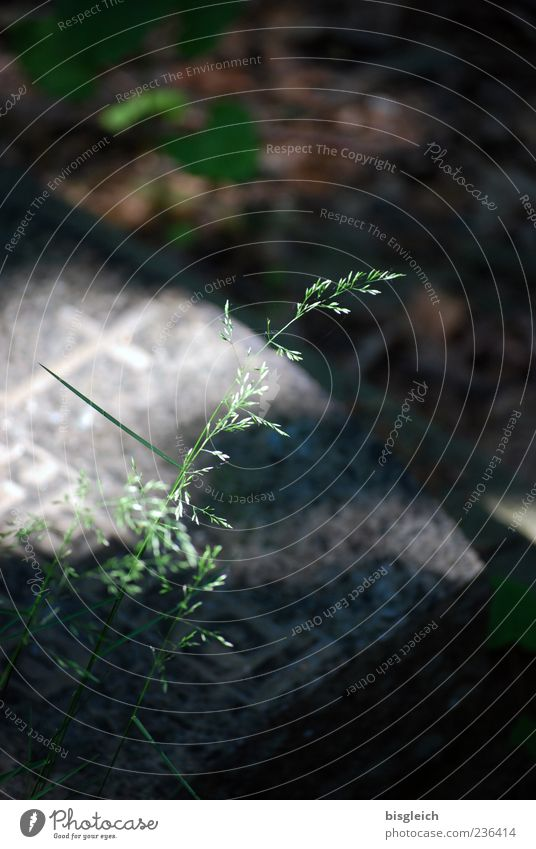 Life & Death II Plant Grass Tombstone Cemetery Gray Green Transience Light Colour photo Exterior shot Deserted Copy Space top Day Shallow depth of field