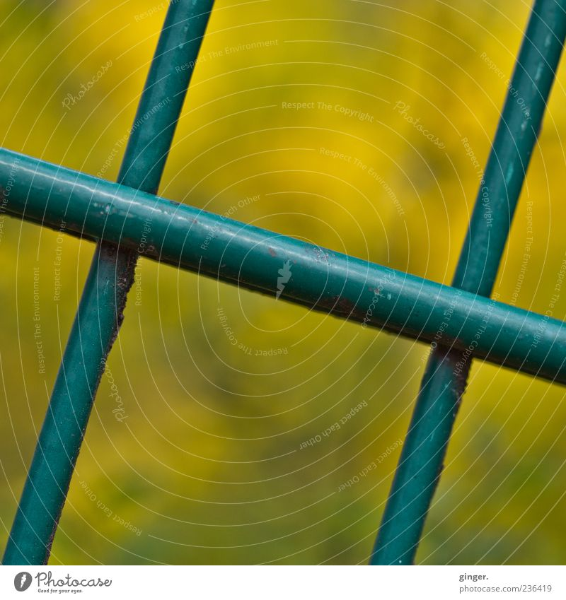 Green Yellow Metal Closed Fence Under Crucifix Diagonal Barrier Grating Rod Crossed Across Varnished Consecutively Abstract