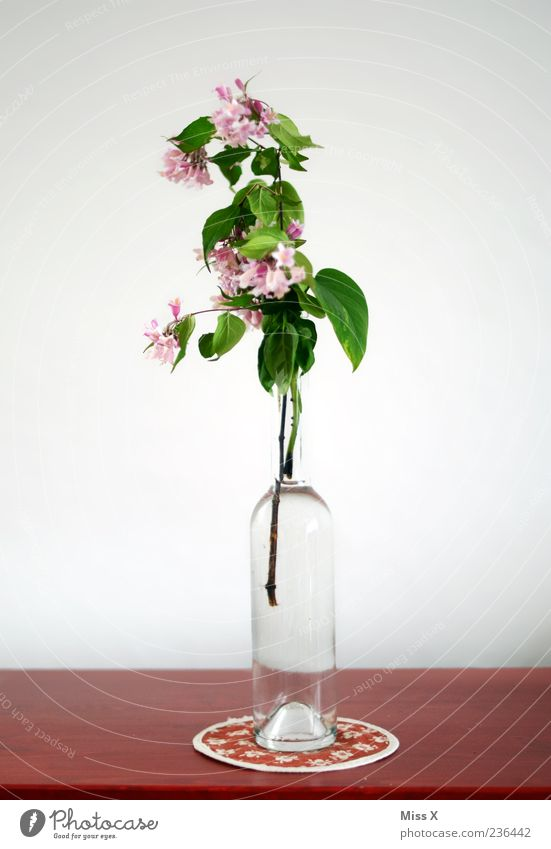 Red Flower Leaf Blossom Pink Table Decoration Branch Blossoming Bouquet Bottle Twig Fragrance Vase Faded Twigs and branches